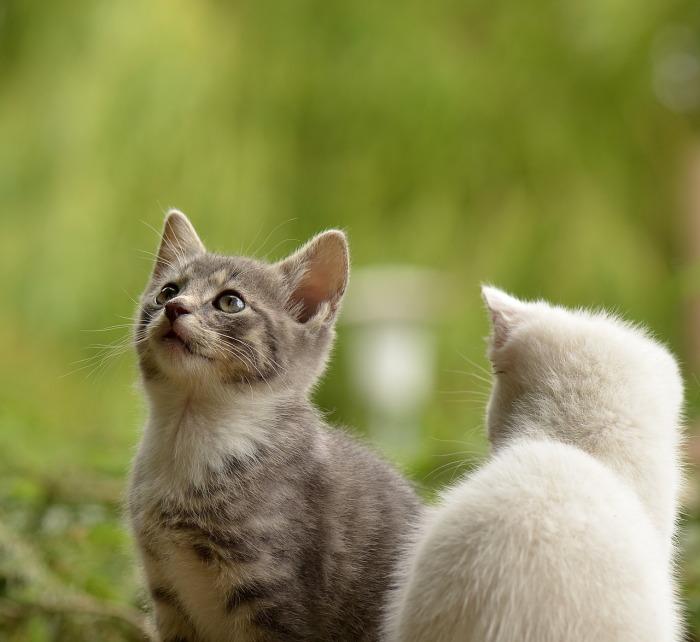 cat-2273598_1280