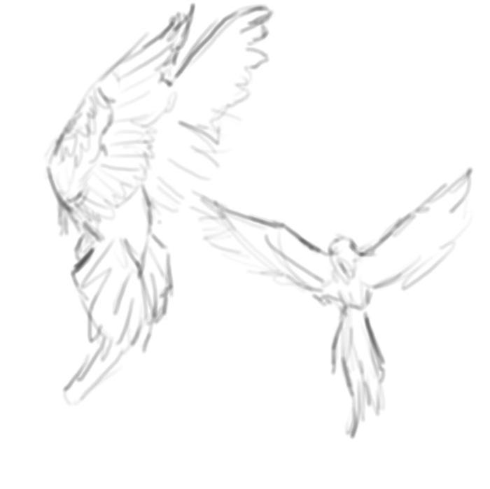 pra bird
